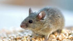 МВД Украины: мыши съели